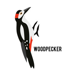 great spotted woodpecker winter bird in a flat vector image