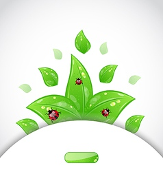 Ladybugs leaves background template vector image