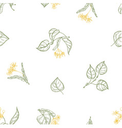 natural seamless pattern with blooming linden vector image