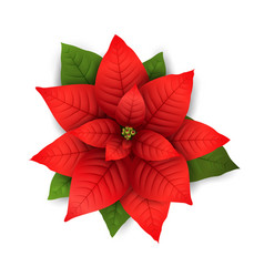 Poinsettia isolated christmas flower vector
