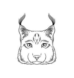 sketch of lynx head portrait of wild serval cat vector image
