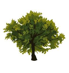 tree oak clip art vector image
