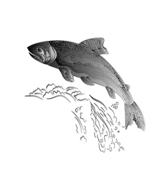Trout jumps in stream salmon-predatory fish as wr vector image