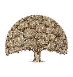 Vintage tree foliage Hand drawn sketch old oak vector image