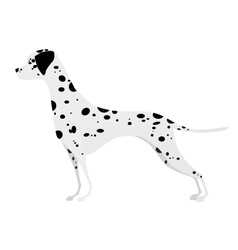 Adorable young Dalmatian standing in profile vector image vector image