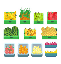fruit store containers with sweet products vector image