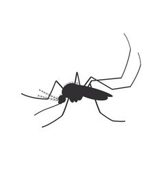 graphic black mosquito vector image