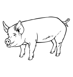 Pig drawing hand vector