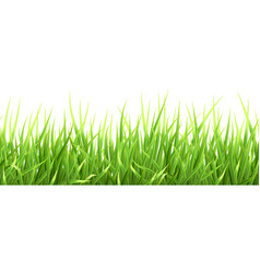 super realistic grass vector image