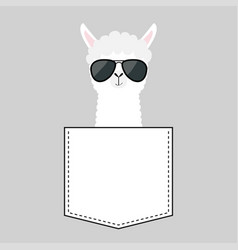 Alpaca llama sitting in pocket face with vector
