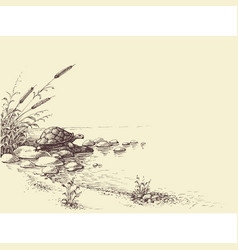 Nature scene hand drawing tortoise on river shore vector
