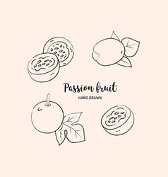 passion fruit drawing passion slice and whole vector image