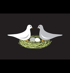 Birds in nest with eggs vector image
