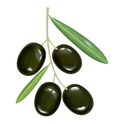 Black realistic olives on white background vector
