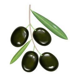 black realistic olives on white background vector image
