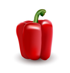 Red bell pepper paprika executed in a realistic vector