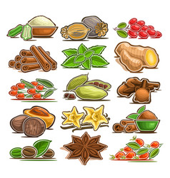 Set of indian spices vector