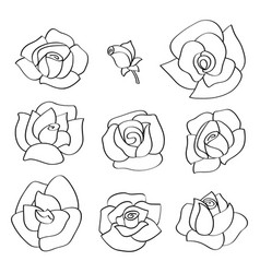 Set with line roses hand-drawn flowers vector