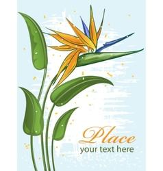 Strelitzia bird of paradise flower vector