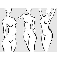 Slim woman body vector image vector image