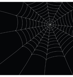 White spider web vector