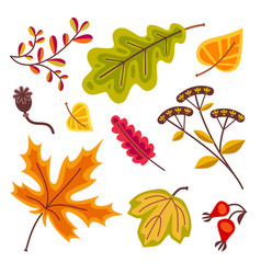 Autumn floral set with leaves of oak leaves maple vector