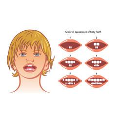 baby teeth vector image