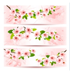 Three spring banners with blossoming sakura brunch vector
