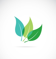Leaves Eco vector image