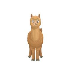 Brown llama guanaco camelid cartoon animal icon vector