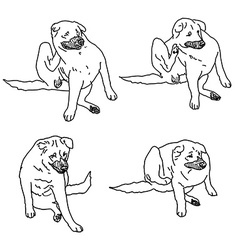 Drawing set of dog scratching itself from itching vector