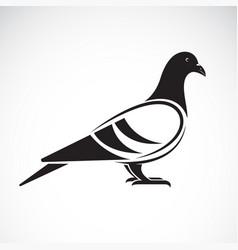 Pigeon design on white background bird vector