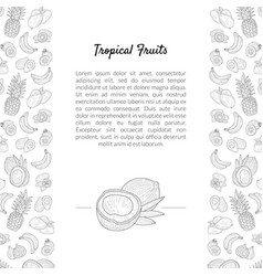 tropical fruits banner template with place for vector image