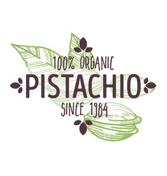 100 percent organic pistachio nut with shell half vector image