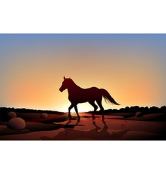 A horse in sunset scenery at the desert vector