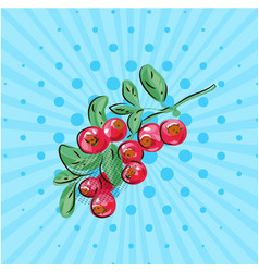 cranberries with leaves on a branch on a blue vector image