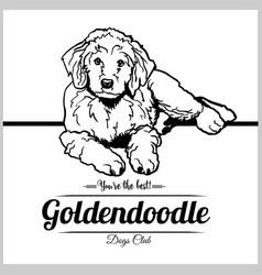 goldendoodle dog - for t-shirt vector image