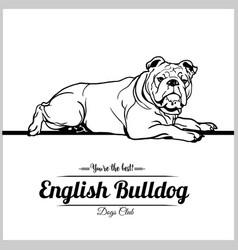 English bulldog dog - for t vector
