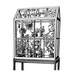 hand drawn sketch of plants in greenhouse vector image