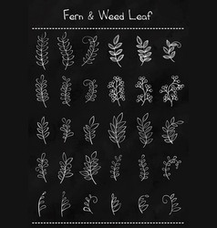 outline fern leaf and weed plant vector image