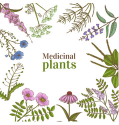 Square template with medicinal plants in hand vector