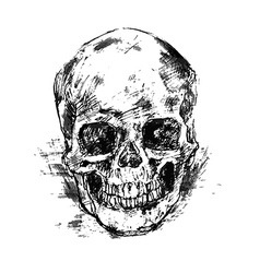 Drawing human skull on white vector image vector image