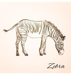 doodle zebra vector image