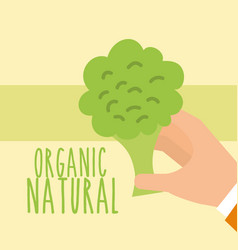 Food organic nature vector