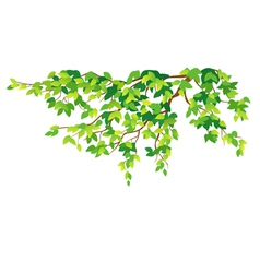Green tree branch vector