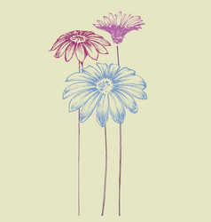 Hand drawn flowers beautiful daisy design for vector
