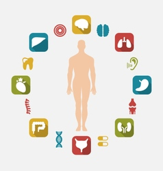Infographic internal human organs vector