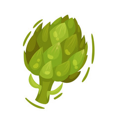 Large green artichoke on vector