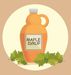 maple syrup canadian product vector image