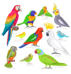 parrot parrotry character and tropical bird vector image